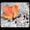 دانلود BadeSaba 7.5 - نسخه جدید تقویم باد صبا (پاییز 95)