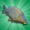 دانلود Carp Fishing Simulator